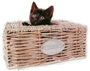 Kitty-in-basket-180.jpg